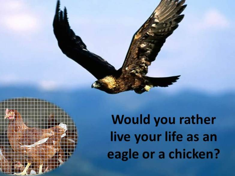 Soaring-Eagle-vs-Caged-Chicken